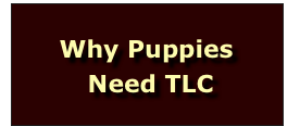 Why Puppies