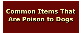 Common Items That Are Poison to Dogs