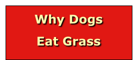 Why Dogs