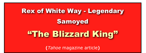"Rex of White Way - Legendary Samoyed  ""The Blizzard King""  (Tahoe magazine article)"