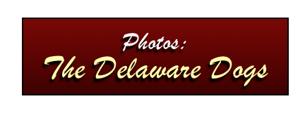 Photos:  The Delaware Dogs